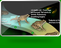 The Virtual Frog Dissection app is a great teaching tool for explaining all about the frog lifecycle.